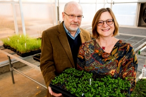 Jack Schultz and Heidi Appel hold model Arabidopsis plants used in many of their experiments in the Bond LSC greenhouses - (C) Hannah Baldwin, LSC