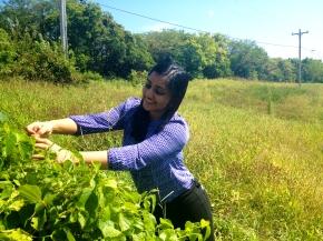 Reshma in the field (Rocheport MO)
